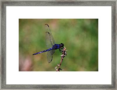 Framed Print featuring the photograph Landing by Linda Segerson