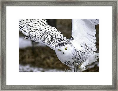 Landing Of The Snowy Owl Where Are You Harry Potter Framed Print