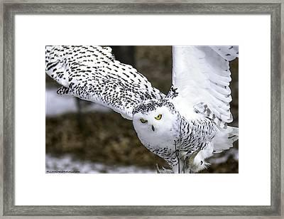 Landing Of The Snowy Owl Where Are You Harry Potter Framed Print by LeeAnn McLaneGoetz McLaneGoetzStudioLLCcom