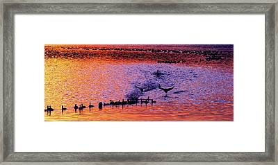 Landing Framed Print by Will Boutin Photos