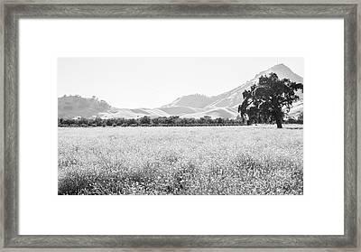 Landscape 24 M  Sac Ca Framed Print