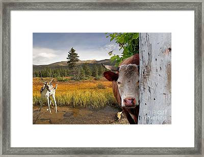 Landscape - Animals - Peek A Boo Cow Framed Print by Liane Wright