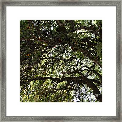 Landscape At The Jack London Ranch In The Sonoma California Wine Country 5d24582 Square Framed Print by Wingsdomain Art and Photography