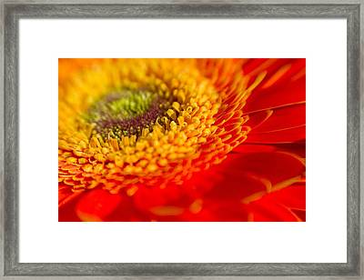 Landscape Of A Flower Framed Print