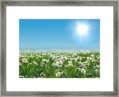 Landscape Vibrant White Flower Framed Print