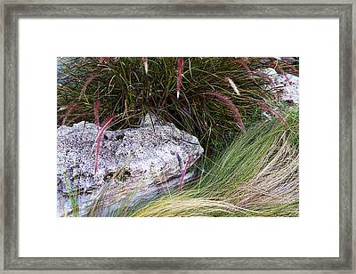 Landscaping Stones And Plants Framed Print by Linda Phelps