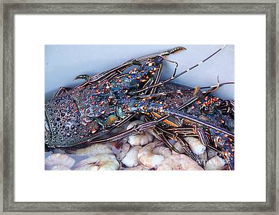 Langosta Mazatlan Framed Print by Linda Queally