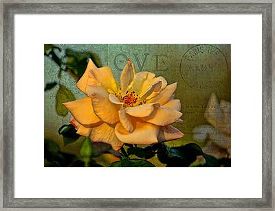 Language Of The Heart - Rose Framed Print by HH Photography of Florida