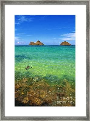 Lanikai Beach Sea Turtle Framed Print