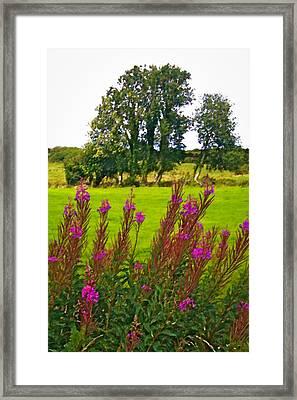 Lanna Fireweeds County Clare Ireland Framed Print