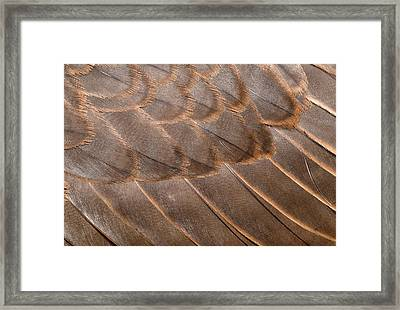 Lanner Falcon Wing Feathers Abstract Framed Print