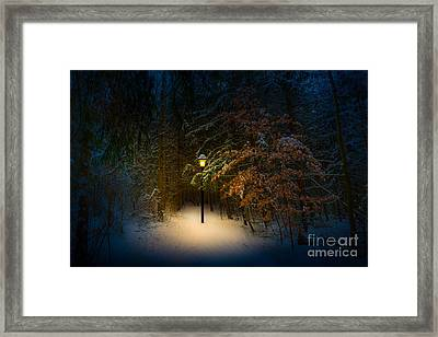 Lantern In The Wood Framed Print