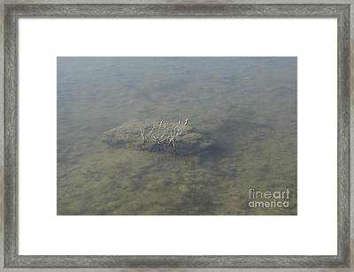 L'arca Di Noe Framed Print by Donato Iannuzzi