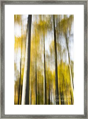 Larch In Abstract Framed Print by Anne Gilbert