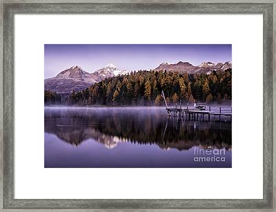 Larch Pine Reflections Framed Print