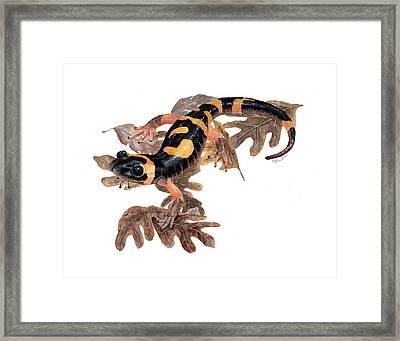 Large Blotched Salamander On Oak Leaves Framed Print