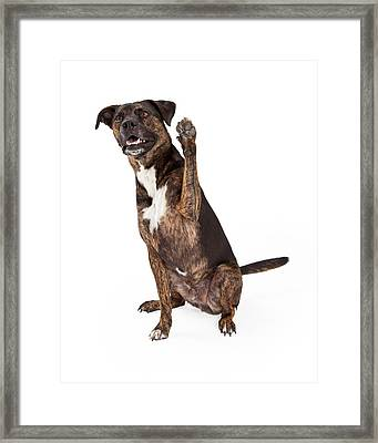 Large Brindle Dog Raising Paw Framed Print