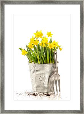 Large Bucket Of Daffodils Framed Print by Amanda Elwell