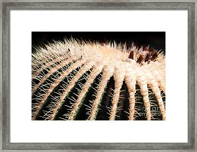 Large Cactus Ball Framed Print by John Wadleigh