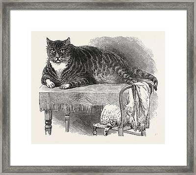 Large Cat, 1850. This Noble Specimen Of The Cat Framed Print by English School