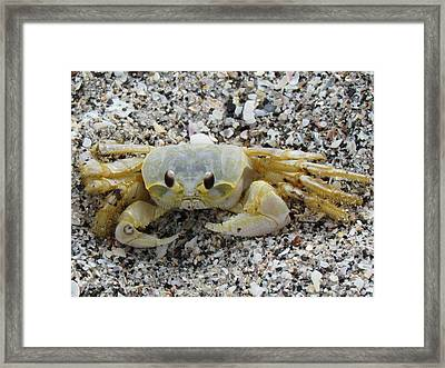 Framed Print featuring the photograph Ghost Crab by Cynthia Guinn