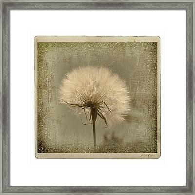 Large Dandelion Framed Print by Linda Olsen