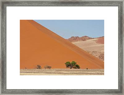 Large Dune With Trees In Front Framed Print by Jaynes Gallery