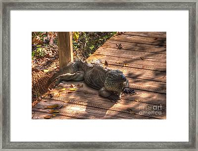 Large Iguana Framed Print by Dan Friend