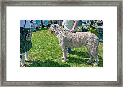 Large Irish Wolfhound Dog  Framed Print