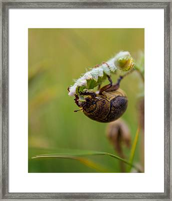 Large Lunch Framed Print by Rhys Arithson