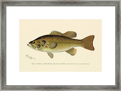 Large Mouthed Black Bass Framed Print by Gary Grayson