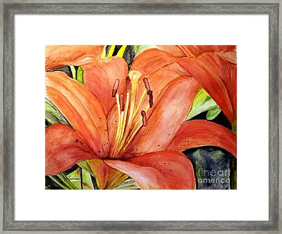 Large Orange Lily Framed Print