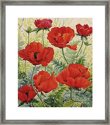 Large Red Poppies Framed Print by Christopher Ryland