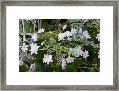 Framed Print featuring the photograph Shooting Star Bouquet by Jeannie Rhode