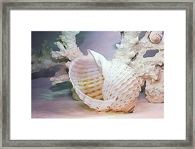 Large Spotted Tun Framed Print