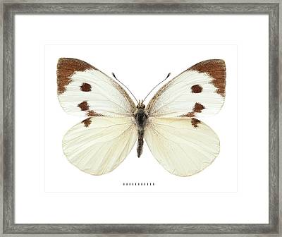 Large White Framed Print by Natural History Museum, London