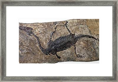 Lariosaurus Balsami Framed Print