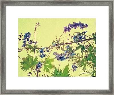 Larkspur Framed Print by Priska Wettstein