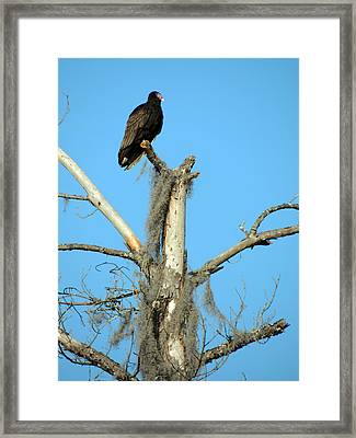 Larry Buzzard Vulture Framed Print
