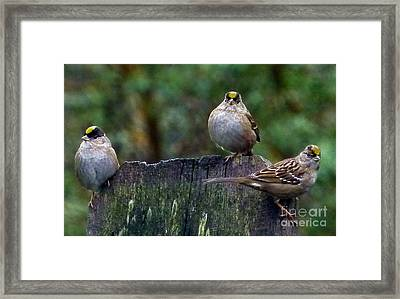 Larry Moe And Curly Framed Print by Julia Hassett
