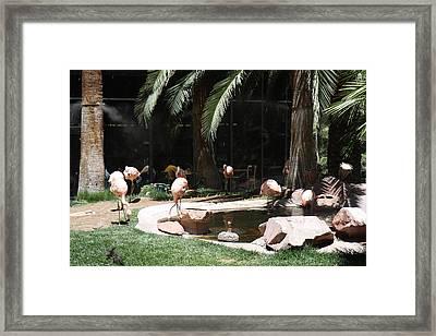 Las Vegas - Flamingo Casino - 12127 Framed Print