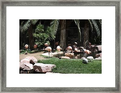 Las Vegas - Flamingo Casino - 12129 Framed Print