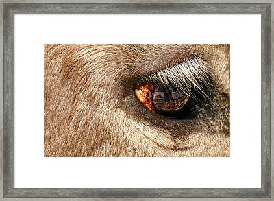 Lashes Framed Print by Diana Angstadt