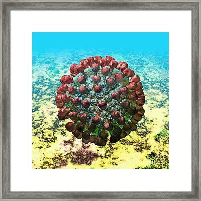 Lassa Virus #4 Framed Print by Russell Kightley