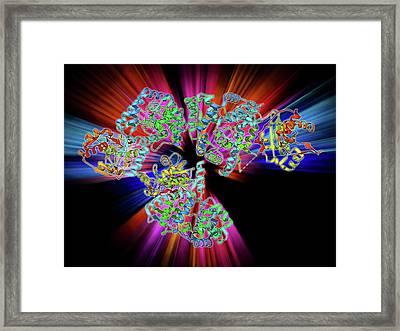 Lassa Virus Nucleocapsid Protein Framed Print