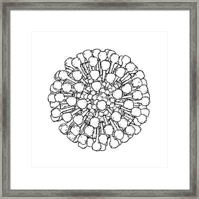 Lassa Virus Particle Framed Print