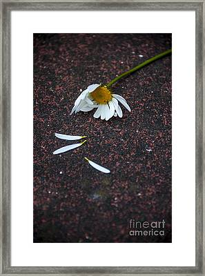 Last Breath Framed Print by Svetlana Sewell