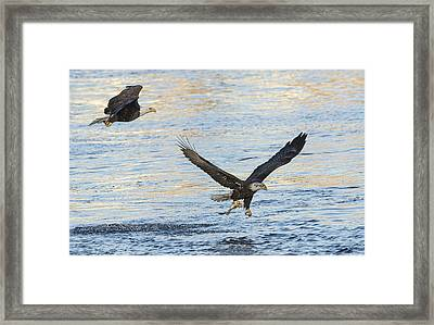 Last Call For Fish Framed Print