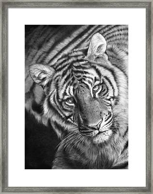 Last Chance To See Framed Print