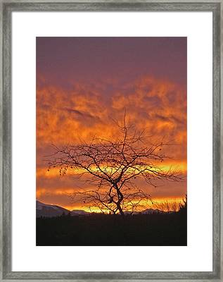 Framed Print featuring the photograph Last Dance by Laurie Stewart